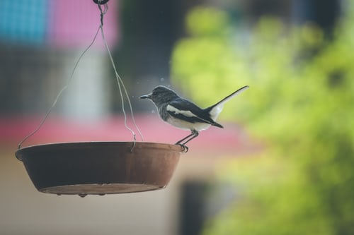 hanging-terra-cotta-bird-bath-with-small-songbird-perched-on-edge