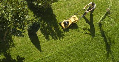 bird's-eye-view-of-person-pushing-yellow-lawnmower-on-green-lawn-near-tree